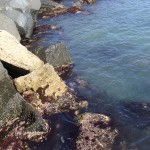 Marea la Ostia,Marea Tireniana