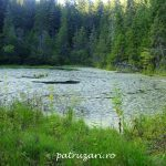 Lacul Negru sau Lacul de Plămână (Nistorești, Vrancea)