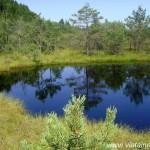 Tinovul Mohoş sau Lacul cu Muşchi