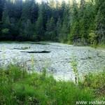 Lacul Negru (Nistorești, Vrancea) sau Lacul de Plămână