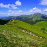 Vârful Ciucaș și rhododendronii de pe Muntele Roșu