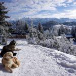 Escapadă de iarnă în Țara Branului