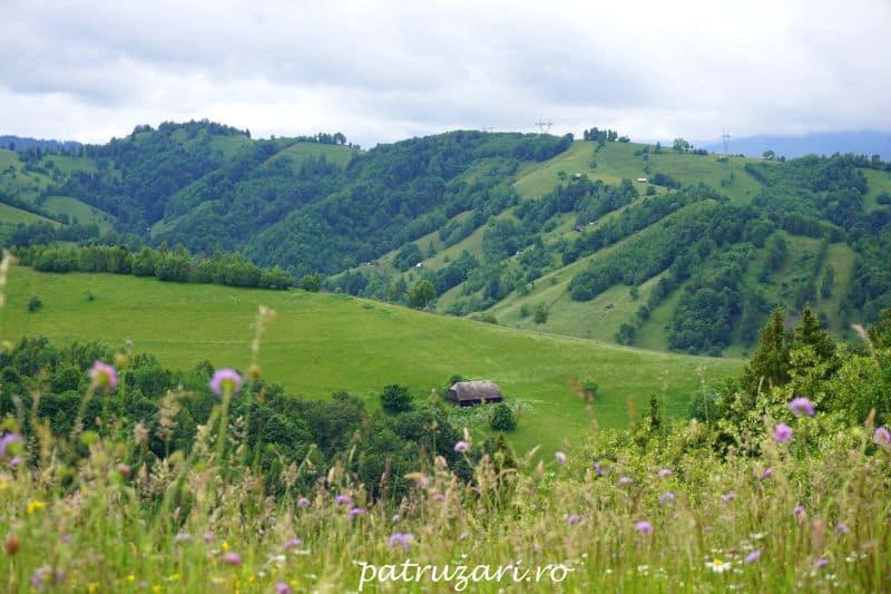 dealul balabanului